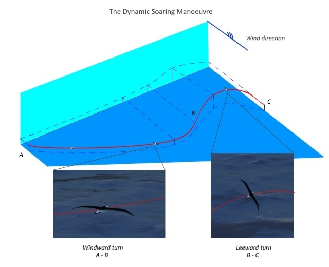 dynamic soaring perspective5
